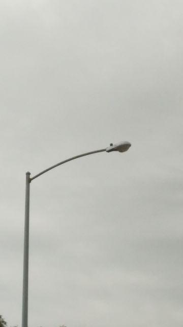 AEL 115 street light & Lighting-Gallery-net - Street lighting in my area./AEL 115 street light